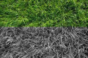 grass_in_monochrome