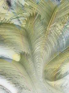 ruffled_feathers