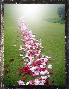 the_petalled_path_of_light