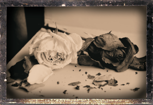 dead_roses
