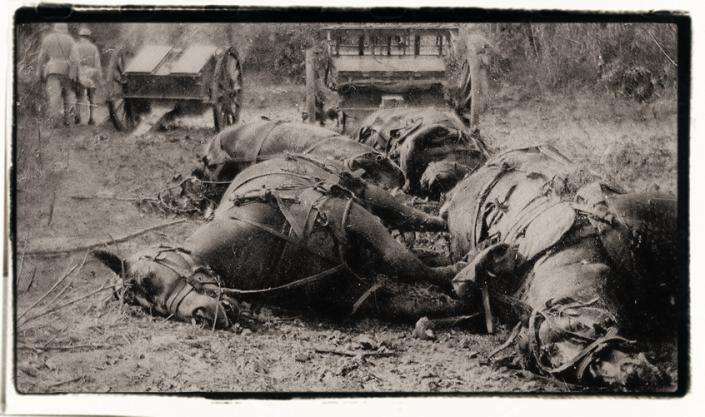 dead-horses