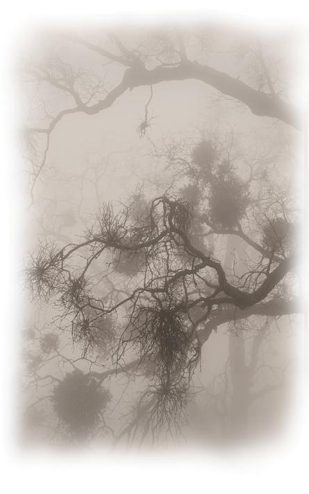 Cosmic Mistletoe